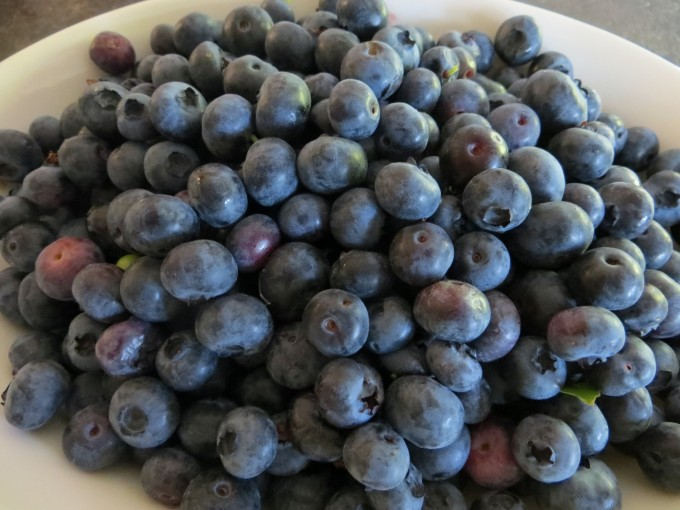 Chemical free blueberries picked from our own garden