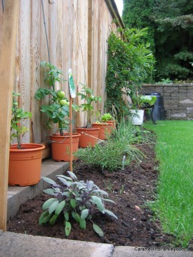 Gardening 101 - The beginning