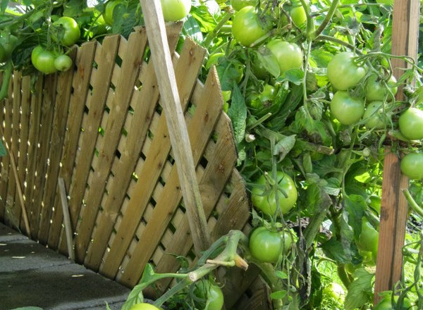 Ideas on How to Start Your 1st Spring Vegetable Garden