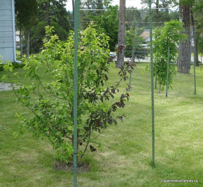 Fence around trees