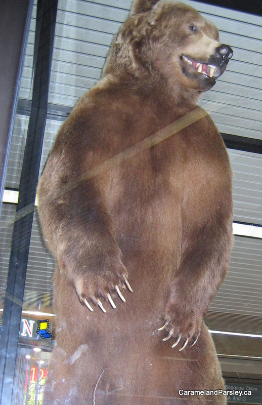 World Record Bear - Anchorage Airport, Alaska (no stats)