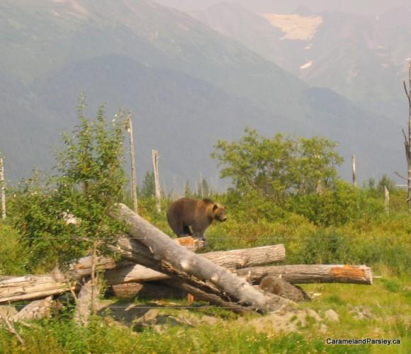 Big Bear - Alaska