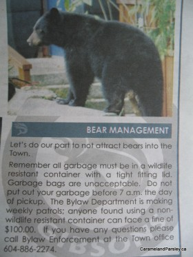 Bear ad in local paper