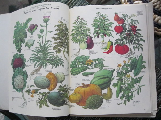 Vegetable illustrations - The Self Sufficient Gardener