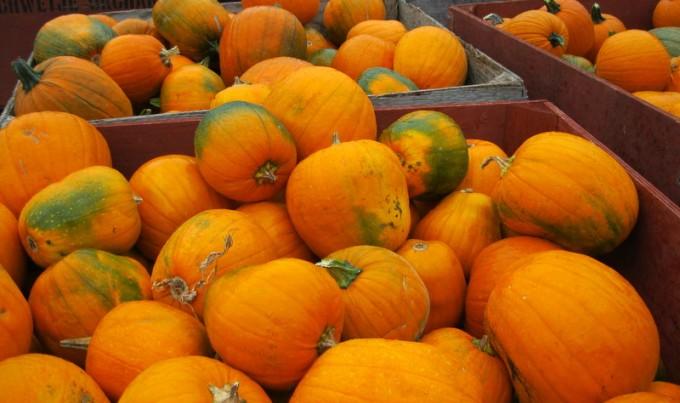 Great Pumpkin Bounty Farmers Market