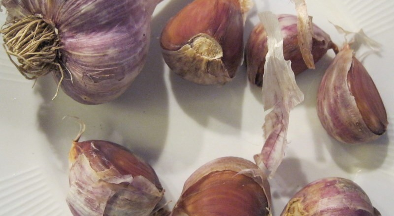Grow Your Own Organic Garlic