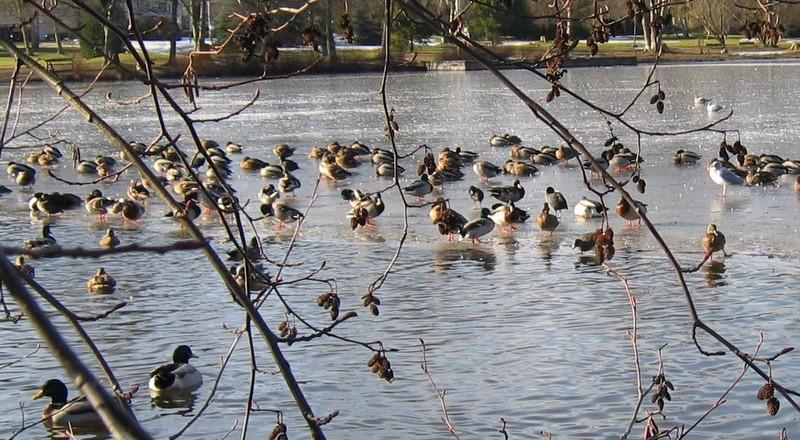 Feeding Small Birds in Winter