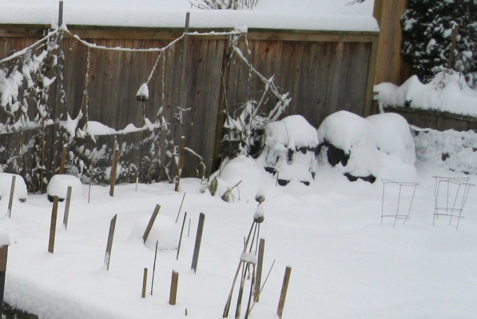 The garden in winter - waiting for springtime