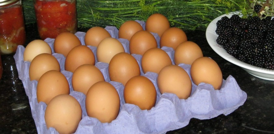Nutritious Healthy Organic Eggs & Recipes