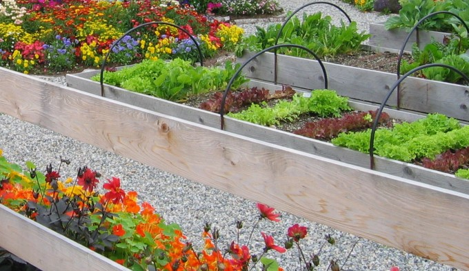 Skagway, Alaska raised beds
