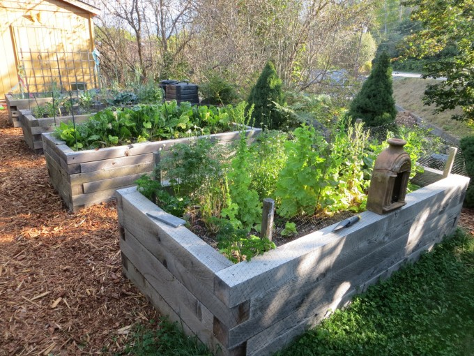 Waist high raised beds