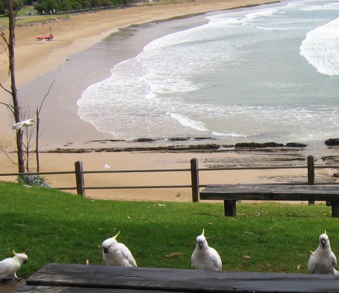 The 12 Apostles & Great Ocean Road Australia