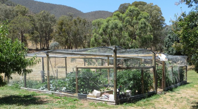 "An Australian vegetable garden : kangaroo, deer, bird and wombat ""free"""