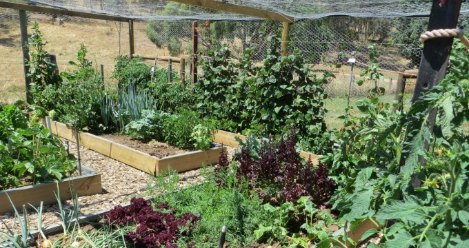 Inside Australian animal proof vegetable garden