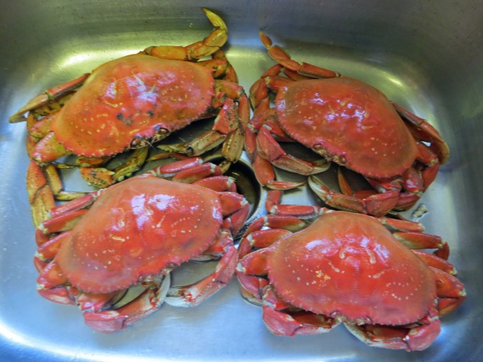 Cooked crabs cooling in sink
