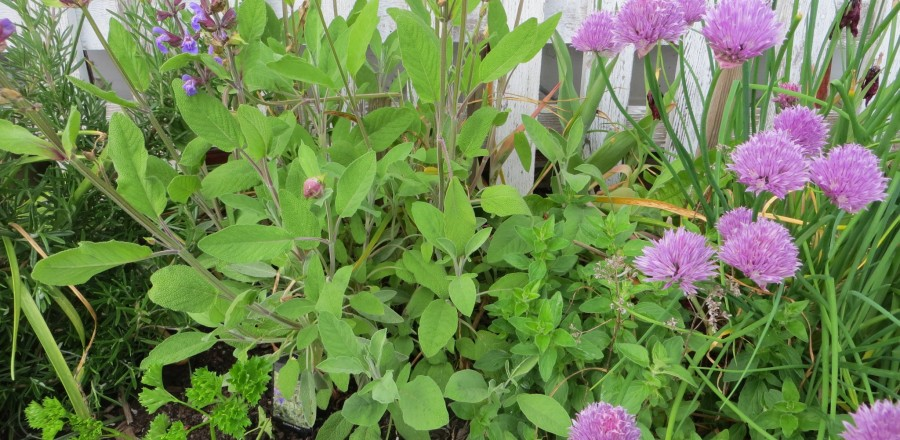 Parsley sage rosemary oregano and chives – easy herbs to grow in a small space
