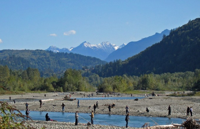 Recreational salmon fishing on the Vedder River