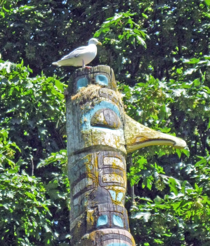 A bird's eye view - seagull on totem at Horseshoe Bay