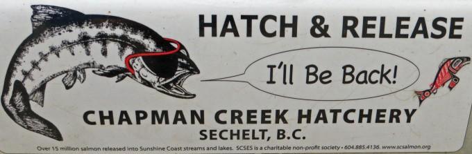 Chapman Creek Hatchery - A good sign (bumper sticker)
