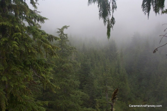 A birds eye view from the canopy - West Coast, Vancouver Island (guest photo)