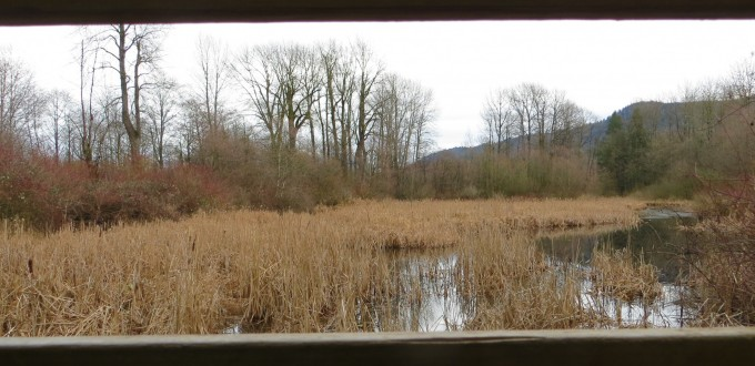 View from bird watching blind