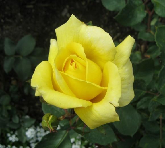 """Beauty"" - Butchart Gardens Victoria BC"