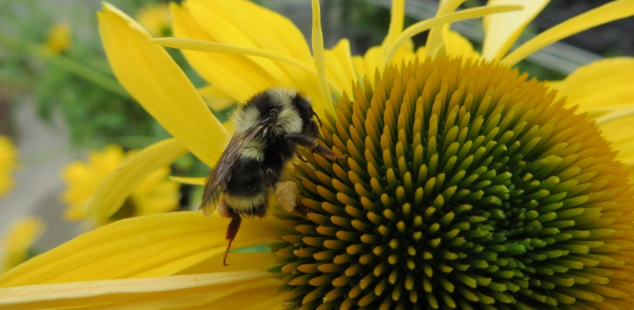 Plants to Attract Bees to Your Garden This Spring