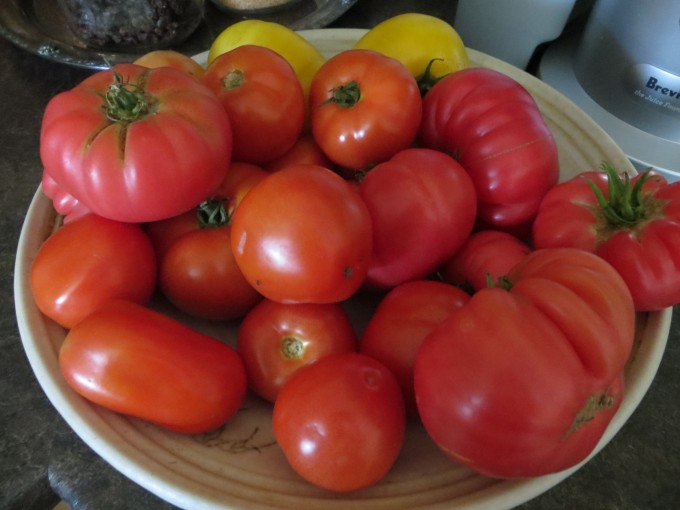 Mid summer tomatoes