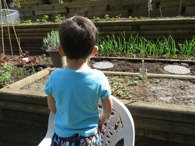 Watching my garden grow with grandchildren ~ a great big positive