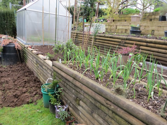 Wood retaining walls with places for sowbugs & slugs to live