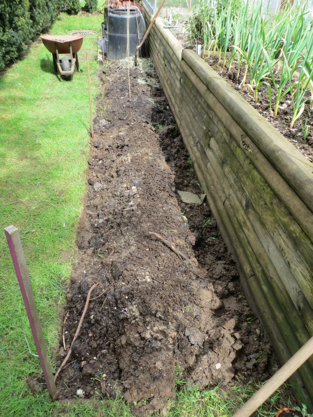 As we have run out of gardening space, a new garden had to be turned before planting raspberries