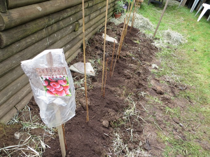 Spring is also a good time to plant new raspberry canes