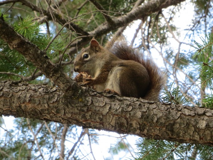 Squirrel snack time