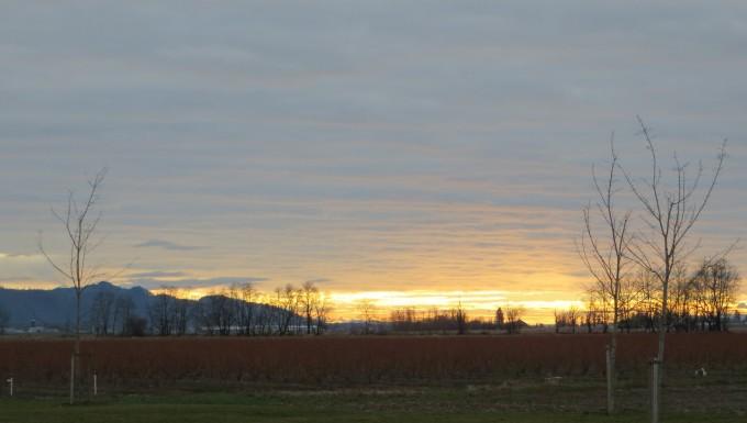 Winter sunset - Fraser Valley