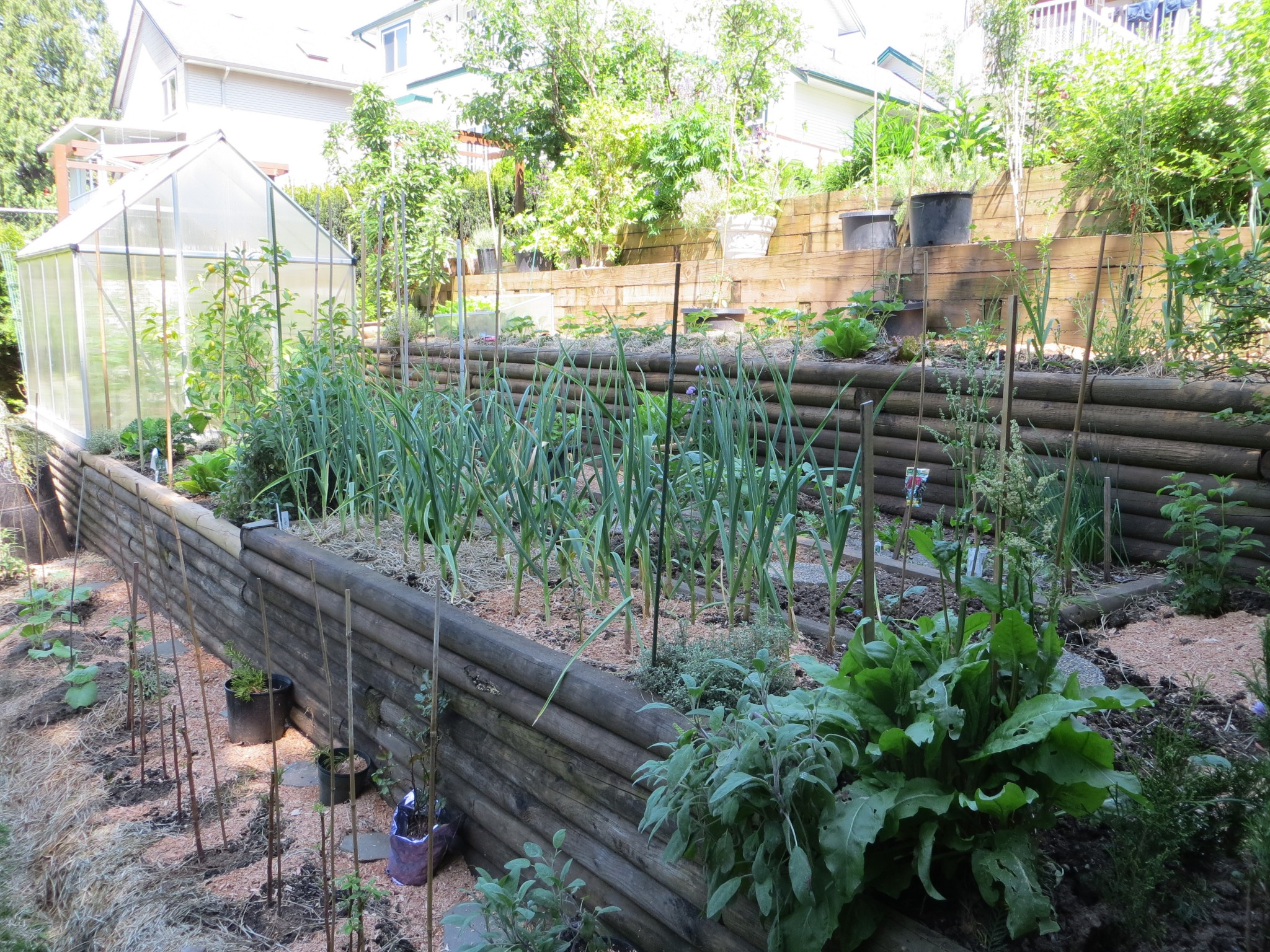 Vegetable Gardening on a Steep Slope - Caramel & Parsley