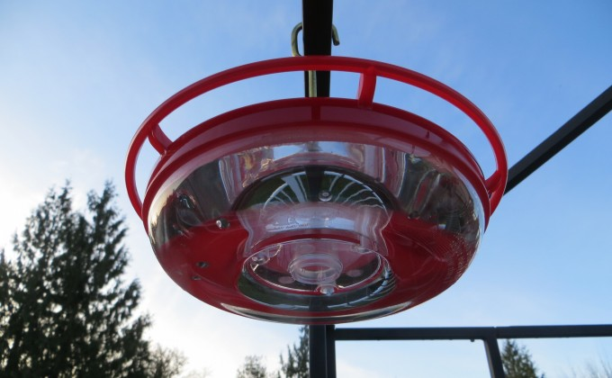 Keep hummingbird feeder clean to avoid disease