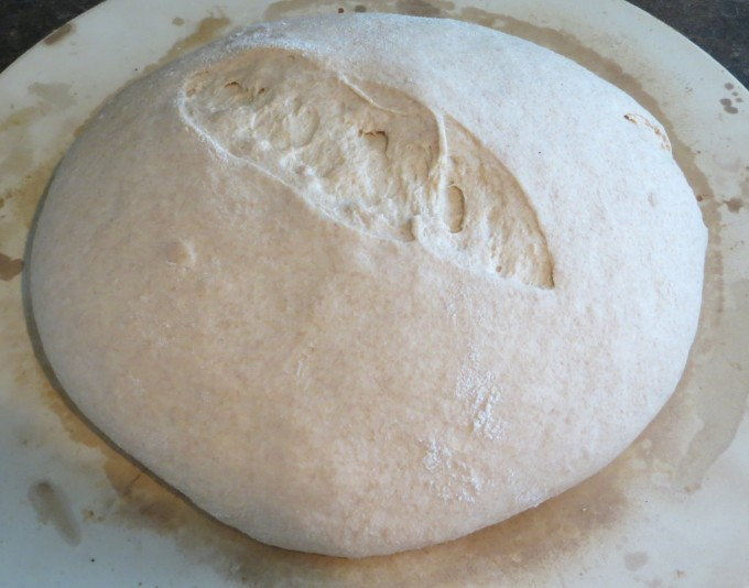 Whole wheat sourdough rising overnight on pizza clay - also used for baking