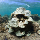 Coral bleaching Fiji. Credit XL Catlin Seaview Survey
