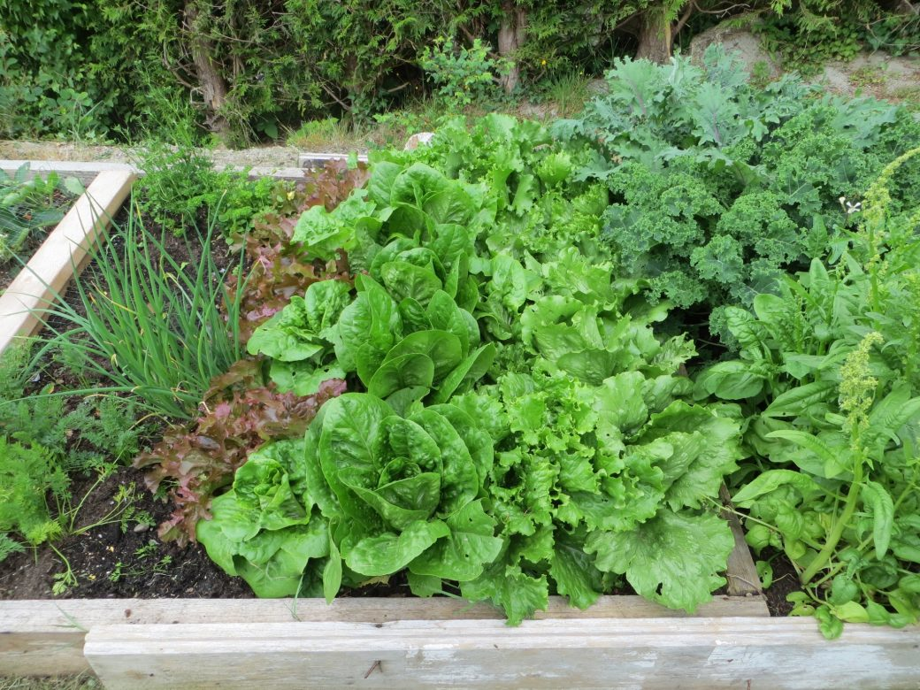 Simple raised bed grows plentiful vegetables