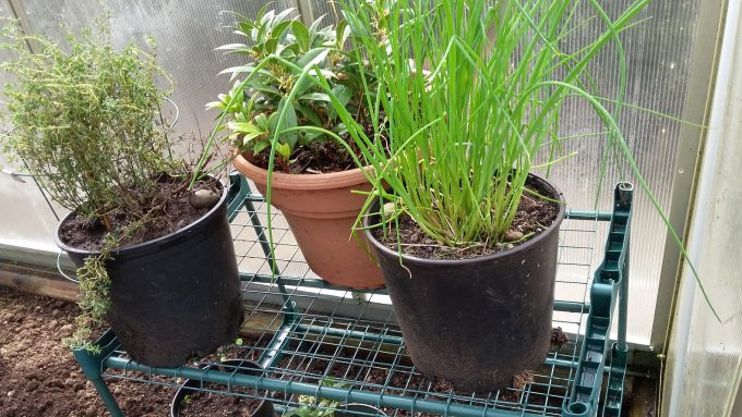 Herbs & Portable Pollinator pots over winter