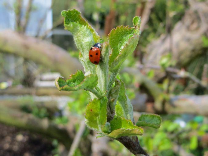 Ladybird visitor