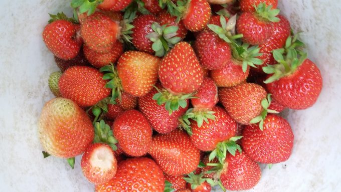 The best: homegrown strawberries