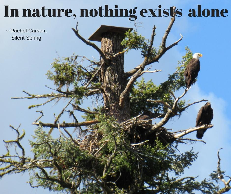 In nature ... Rachel Carson