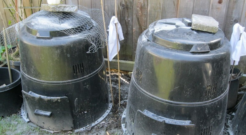How to Keep Raccoons out of Compost bins