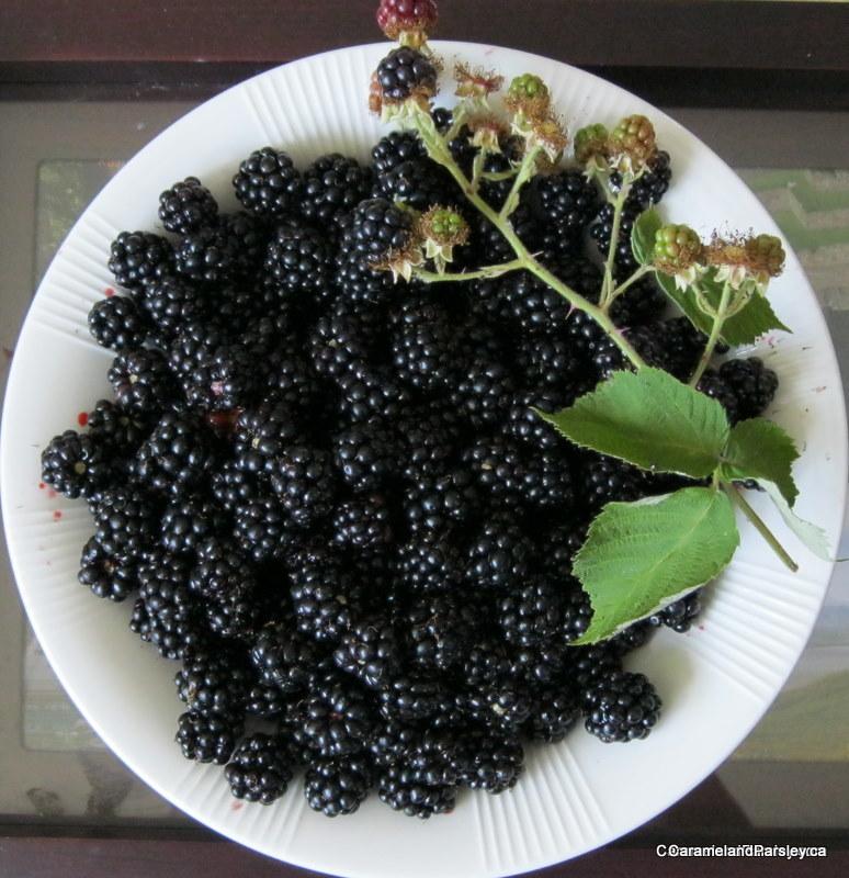 Freshly Picked Wild Blackberries