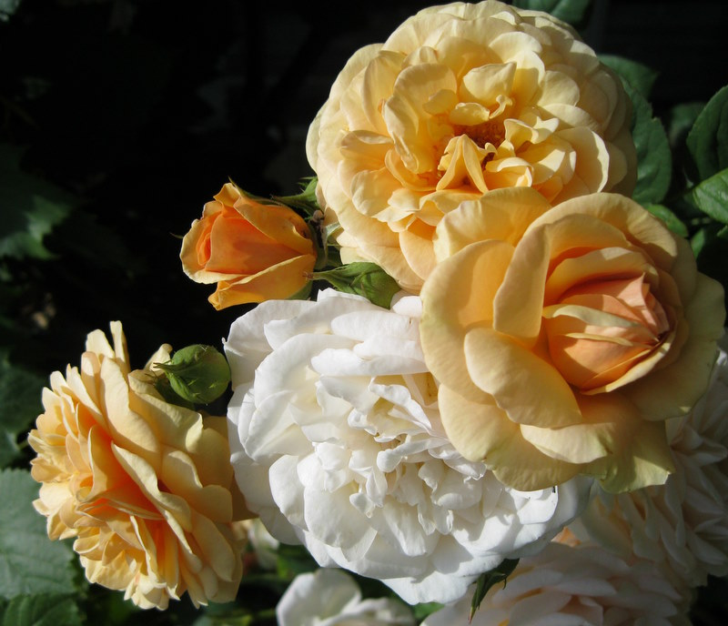 Part of Life's Journey - stop and smell the roses