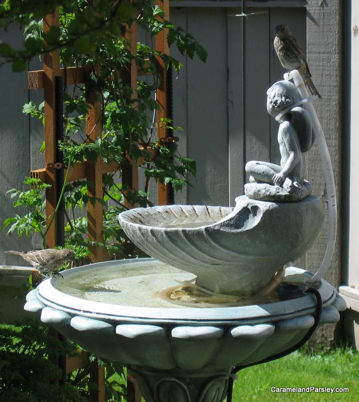 Sparrows on bird bath