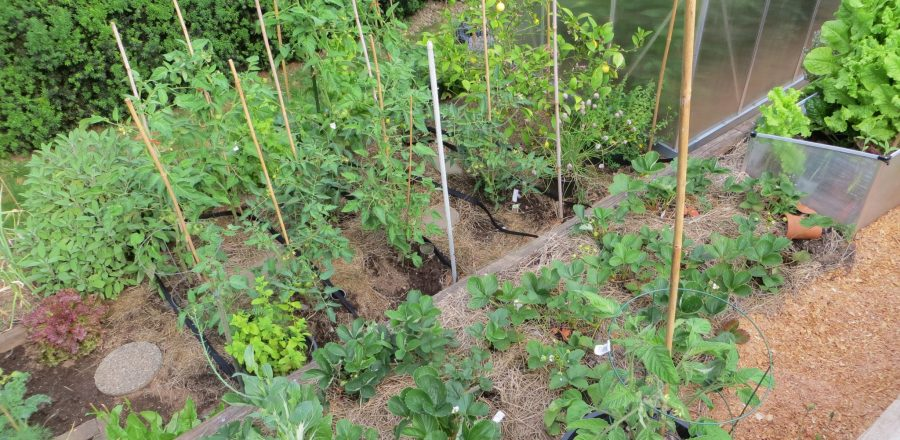 Grow Your Favourite Vegetables at Home