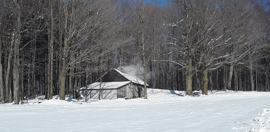 Visit to a Family Maple Syrup Farm in Quebec